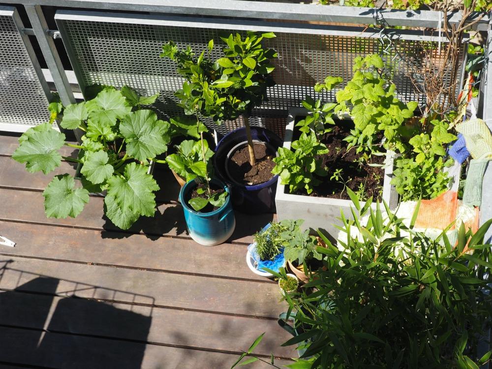 Urban Gardening Gemuse Auf Dem Balkon Teil 2 Wie Pflanze Ich