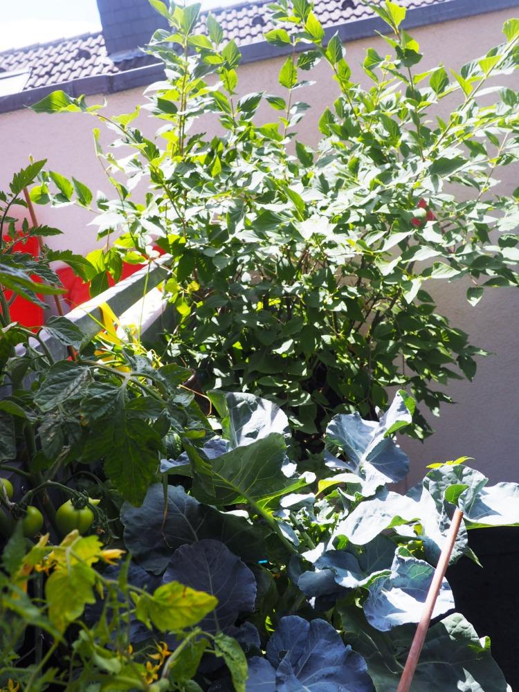 urban gardening gem se auf dem balkon teil 2 wie pflanze ich richtig ordnungsliebe. Black Bedroom Furniture Sets. Home Design Ideas
