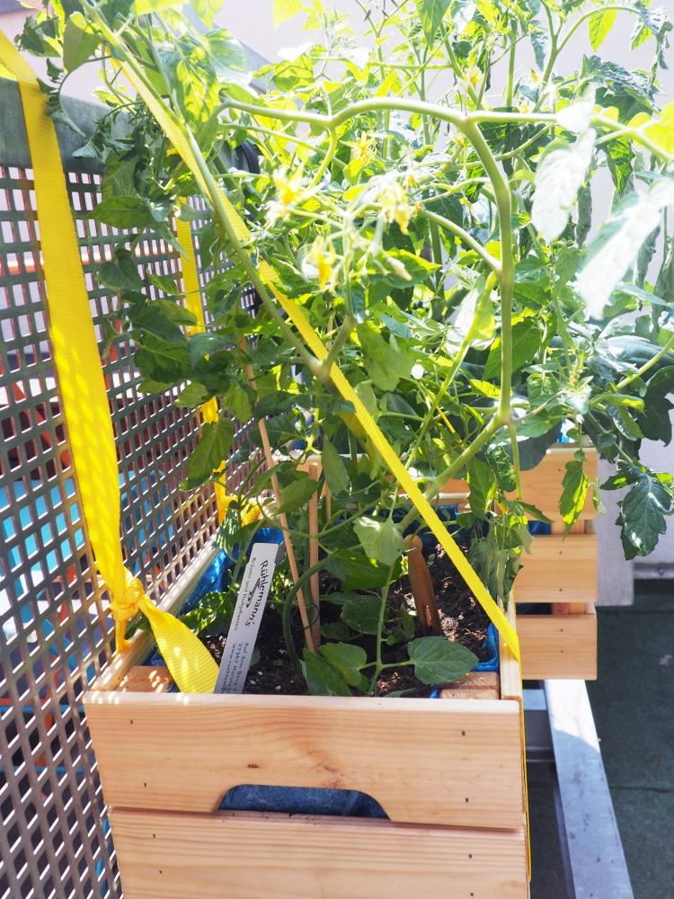 urban gardening gem se auf dem balkon teil 2 wie. Black Bedroom Furniture Sets. Home Design Ideas