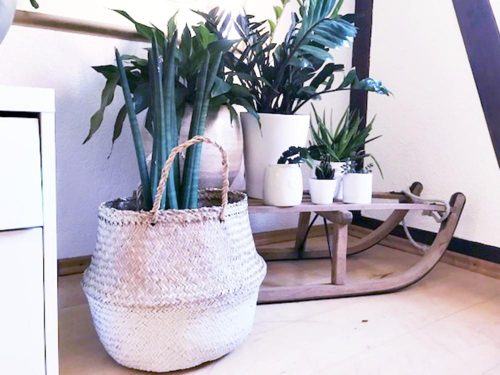 urban jungle gr n in der wohnung und ein bisschen ordnung ordnungsliebe. Black Bedroom Furniture Sets. Home Design Ideas