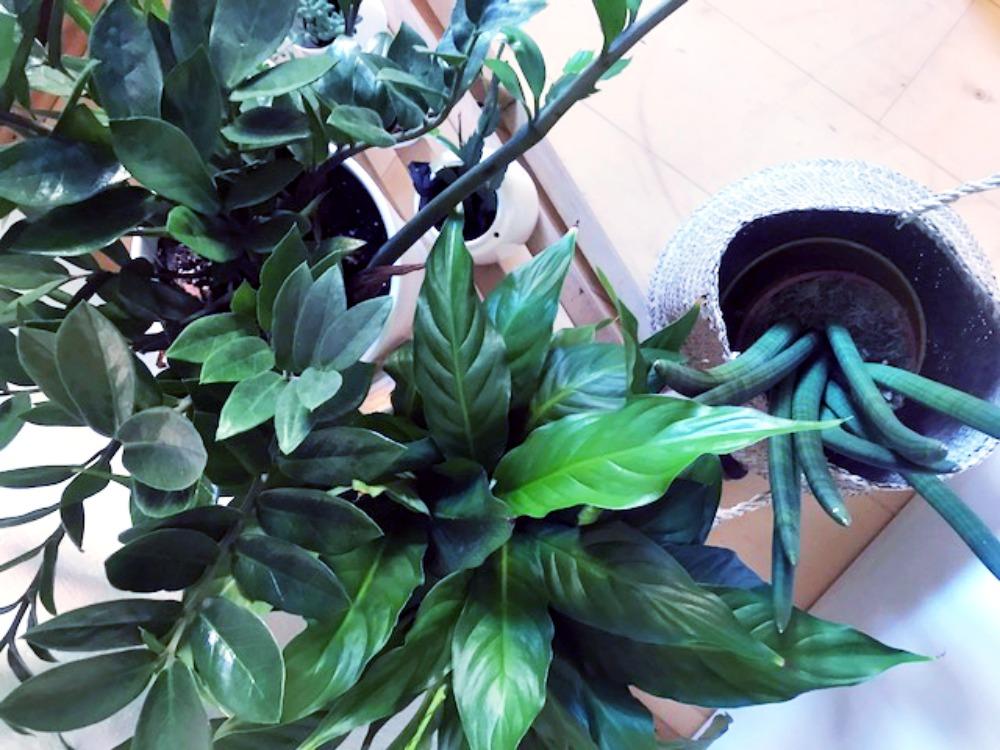 Schlitten mit Pflanzen