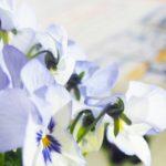 Blogparade Alles neu macht der Frühling