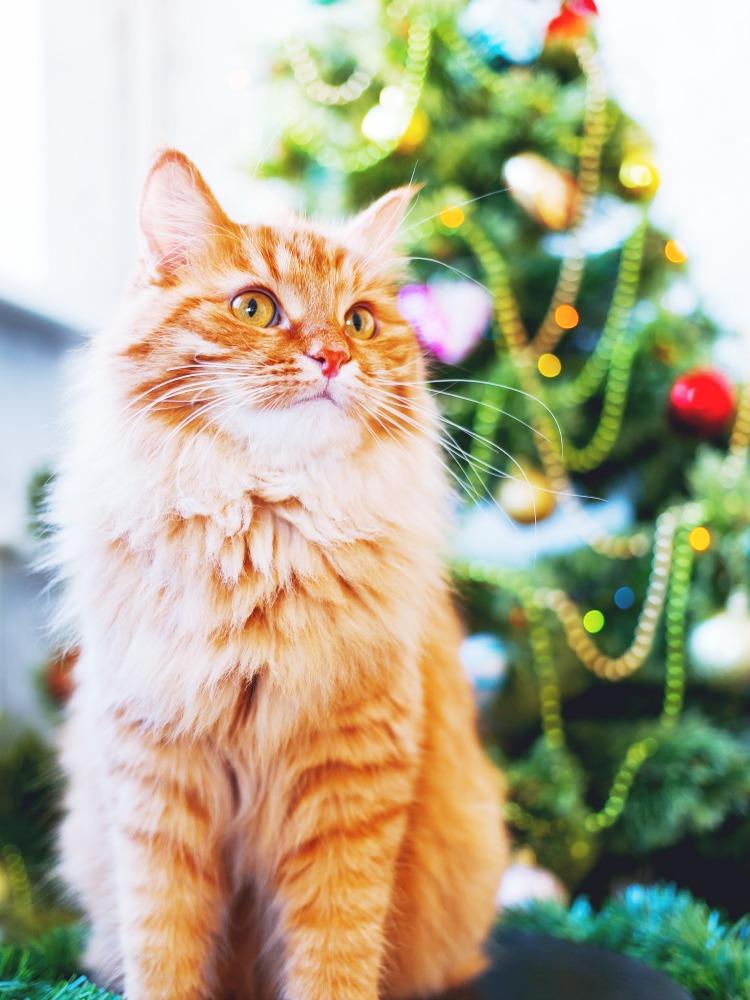 Weihnachtsbaum by Aksenov_K