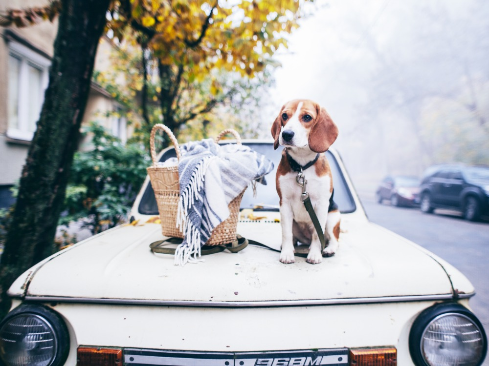 mit Hund verreisen