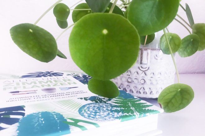 Alles Ueber Zimmerpflanzen Buch