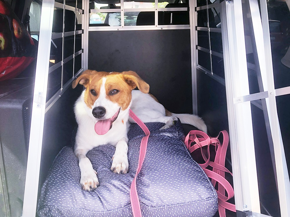 Freida in Hundebox
