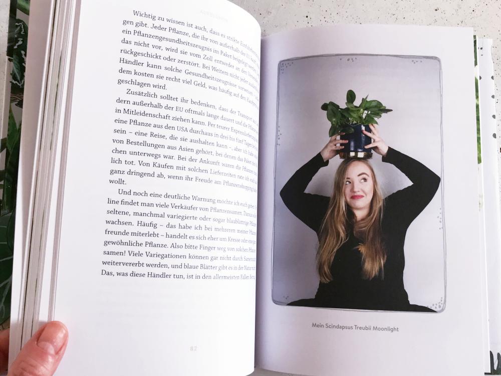 Aufblühen: Wie Zimmerpflanzen uns helfen, gesund zu bleiben